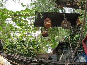 21.Birdcages