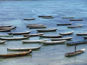 "Seaweed ""farming""  boats."