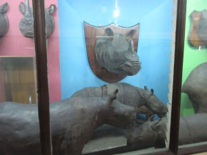 Stuffed Rhinos, probably from the late 19th century.