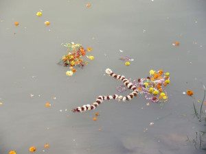 Garlands floating on the Hooghy, from a Hindu ritual