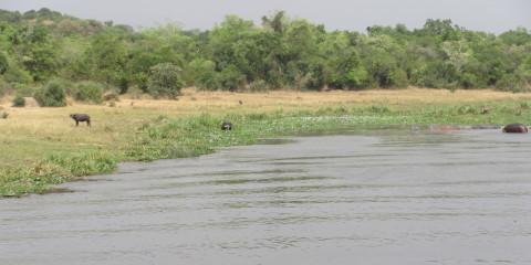 Ugandan Photo Safari, Part 2: The Mighty Nile