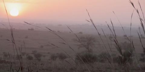 Ugandan Photo Safari, Part 1: Three of the Big Five