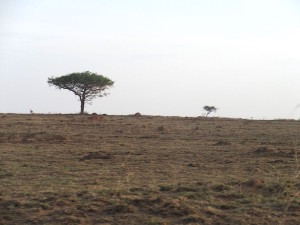 Acacia tree in the distance...