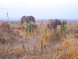 MP.31.Elephant2