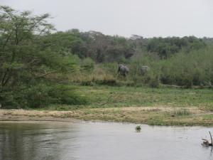 MP.56.ElephantsInBush