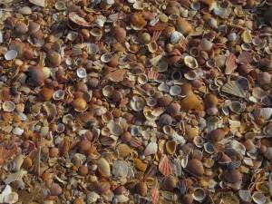Albufeira.03.Shells