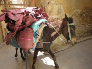 Fes.03.DonkeyMainTransport