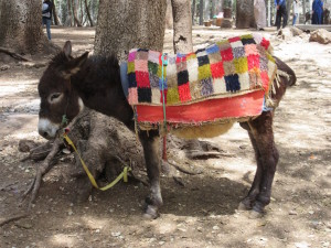 Ifrane.07.DonkeyWithBlanket